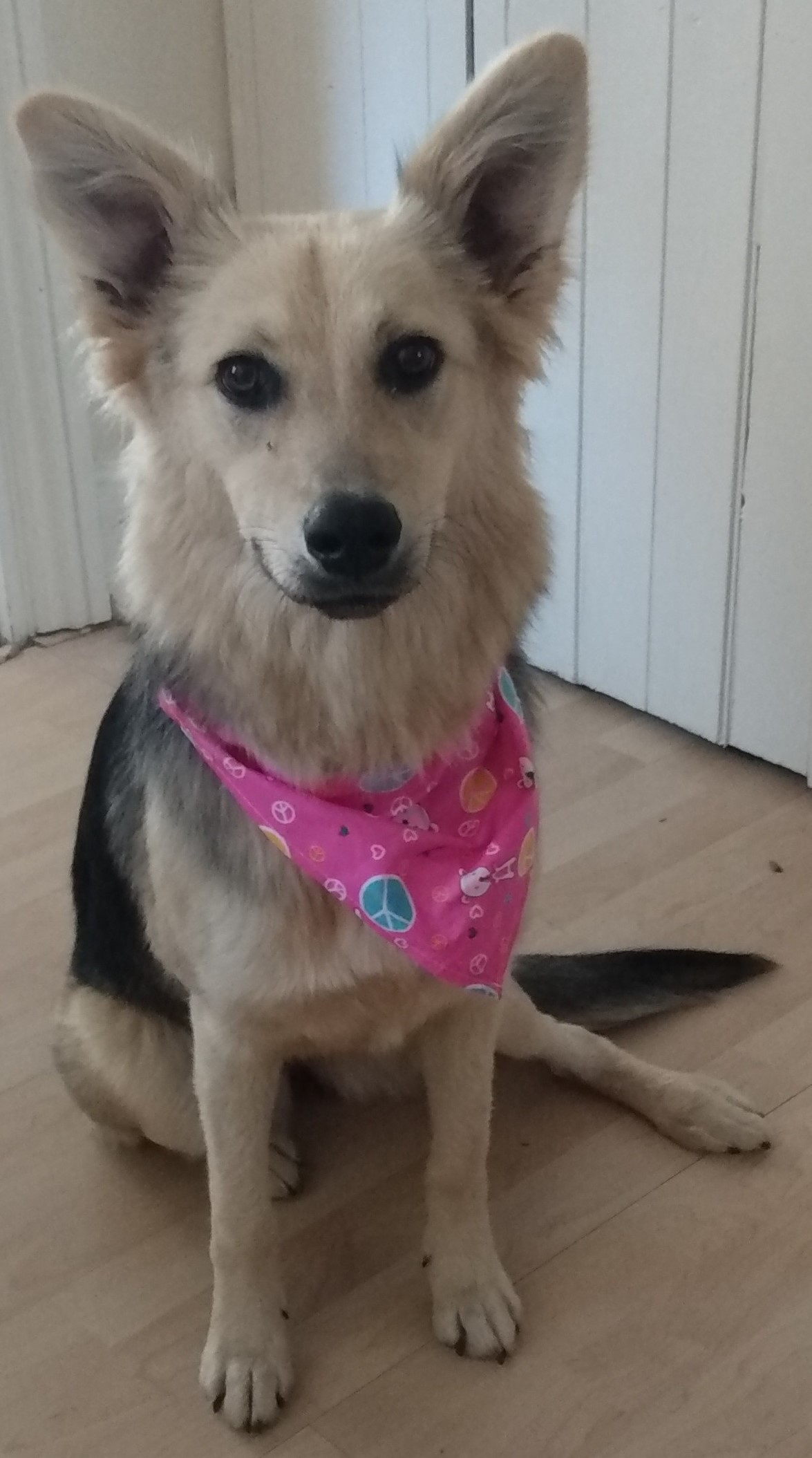 Mixed breed rescue dog