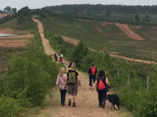 Guided dog walk on the heaths