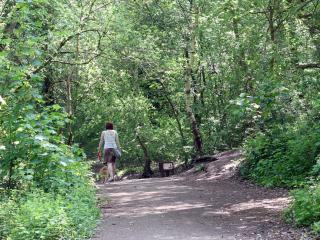 Person walking a dog at Decoy Country Park
