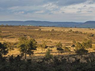 Landscape photo of the Pebblebed Heaths