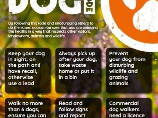 Pebblebed Dog Code poster
