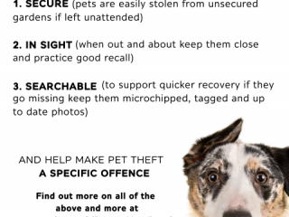 Poster about the Protect Your Pooch campaign