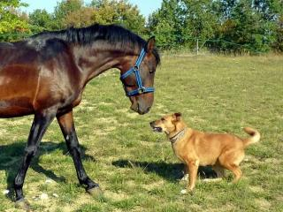 Horse and a dog nose to nose.