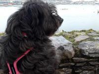 Black Water Dog