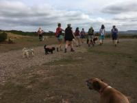 Group of people and their dogs on the heaths