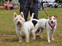 A photo of a scottish terrier and a jack russell at Dawlish Countryside Park