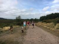Group of dog walkers during a walk on the heaths