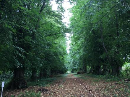 Woodland path on the Killerton Estate